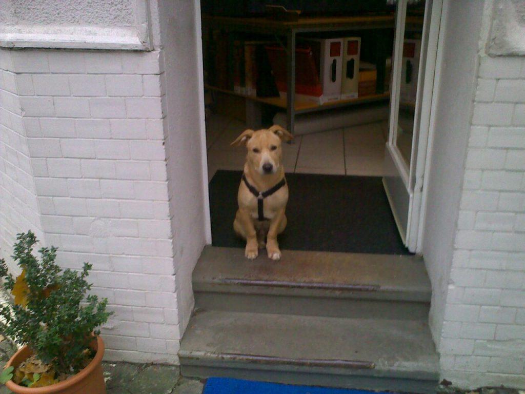 Hund Max in der Haustür