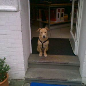 Max: Opfer eines überholten Hundegesetzes