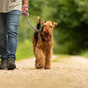 Politikdilettantismus: Abgeordnete verhängen absoluten Leinenzwang für alle Hunde