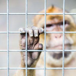 Strafbefehle gegen Verantwortliche der Tübinger Affenversuche