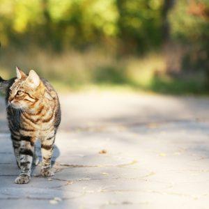 Hauskatzen: Kastrations- und Kennzeichnungspflicht
