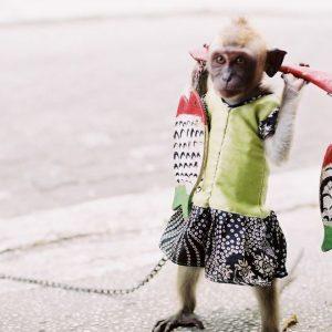 Tipps für den Tierschutz im Urlaub