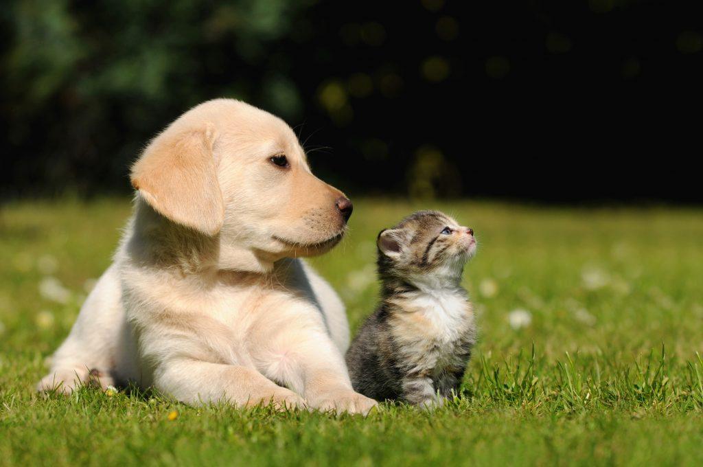 Hund und Katze in der Sonne