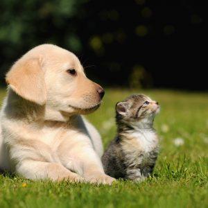 Sommer, Sonne und unser Haustier