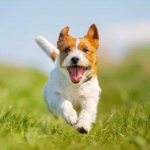 Typisch Klöckner: Neue Hundeverordnung ist reiner Populismus