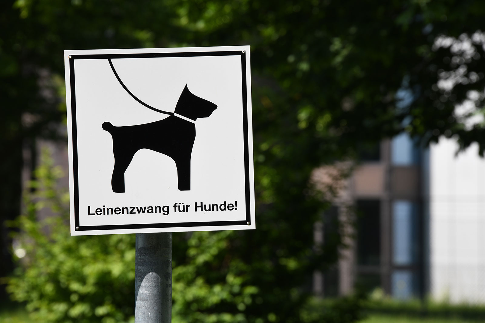 Hundeverbot Schlachtensee und Krumme Lanke