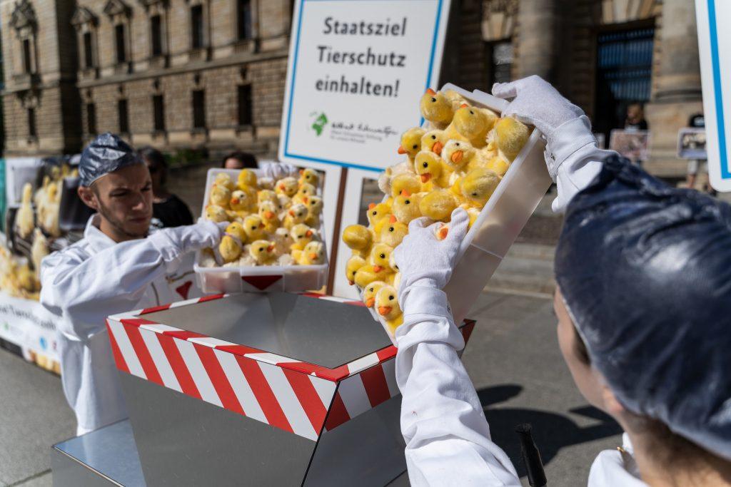 Zwei Demonstranten schreddern Stoffküken vor dem Bundesverwaltungsgericht in Leipzig.
