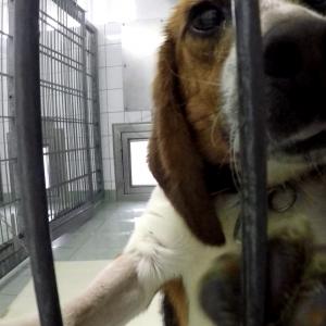 Behördenversagen bei Tierversuchen in Niedersachsen: