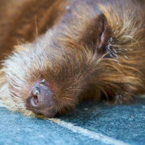 Zwei Hunde bei Razzien in Halle getötet