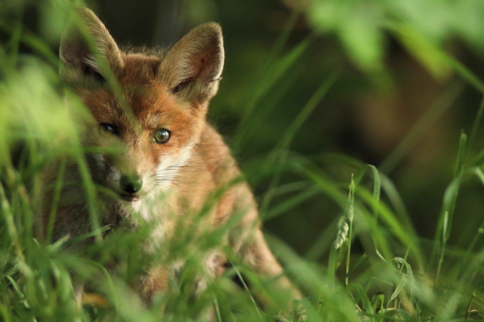 Tierschutz im Jagdrecht