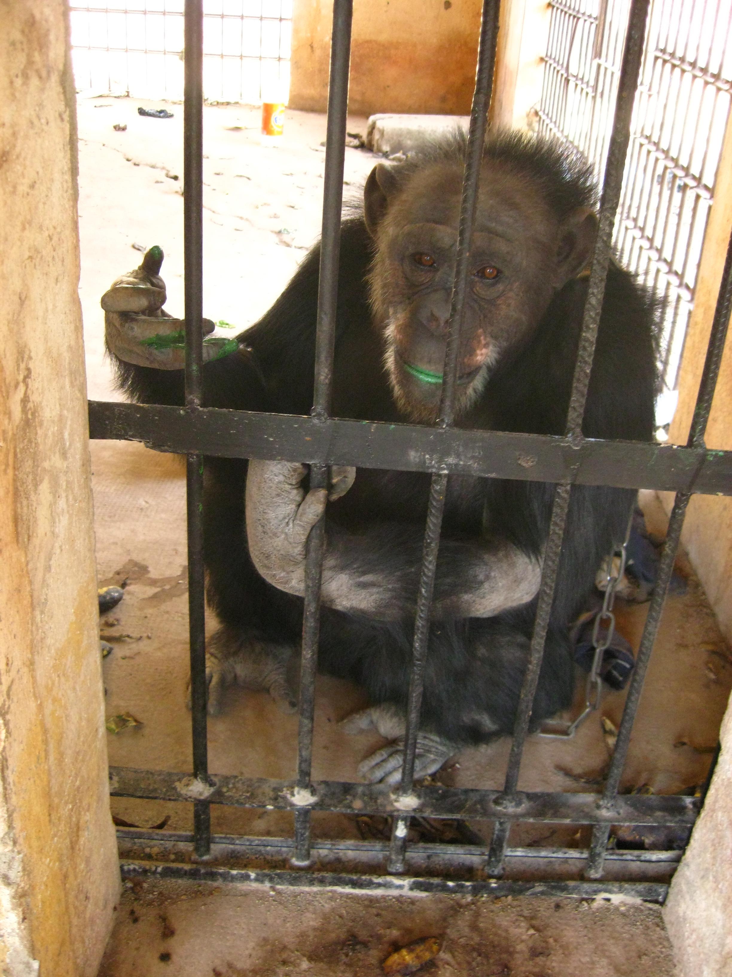 Lolita Malaction Käfig Nr 1 (26) - hinter Gitter