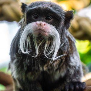 Primatenzentrum: Wurden schon seit Jahren gesunde Affen getötet?