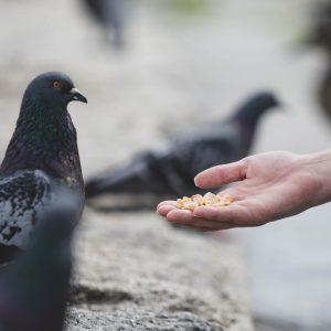 Tauben am Münchener Hauptbahnhof verhungern!