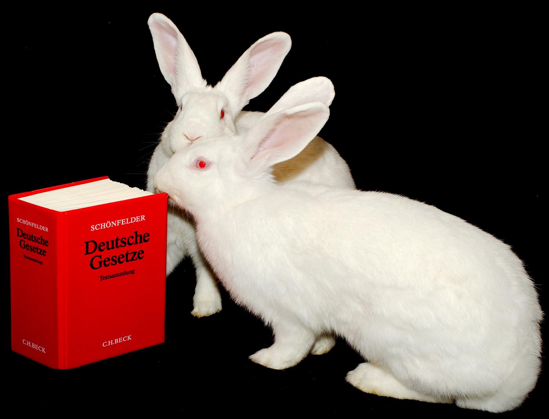 Mit der tierschutzrechtlichen Verbandsklage können Organisationen im Namen der Tiere klagen