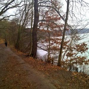 Hundeauslaufgebiet Grunewald wird verkleinert