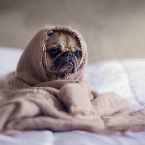Tiere leiden in Hunde- und Katzenwaschanlage
