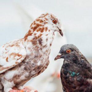 Kernaussagen der Klage gegen Verbot der Taubenfütterung