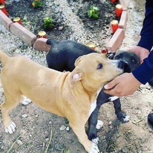 Interview mit der Familie der getöteten Hunde in Halle