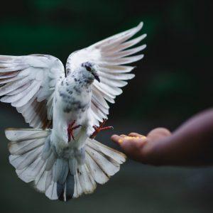 Fütterungsverbot für Tauben wegen Corona-Virus aussetzen