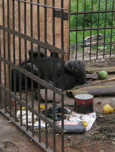 Ein trauriges Bild: Lolita angekettet in ihrem Gefängnis inmitten von Müll